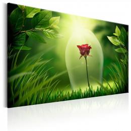 Tablou canvas Trandafirul magic