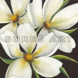 Tablou flori albe Plumeria, inramat, 70x70 cm