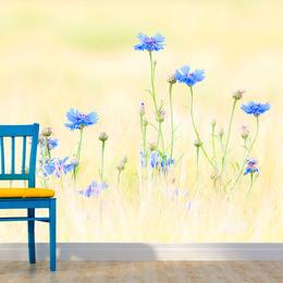 Fototapet - Cornflowers