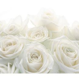 "Fototapet ""Trandafiri albi"" - colectia Extra"
