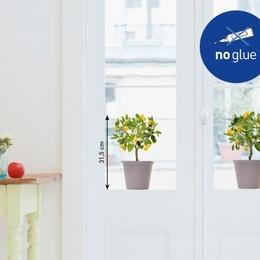 Sticker de geam ''Ghivece cu portocali''