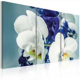 Tablou canvas Orhidee himerice