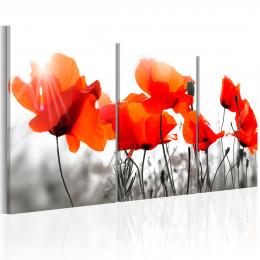Tablou - Charming Poppies