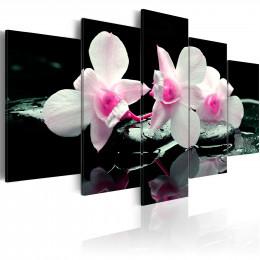 Tablou - Rest of orchids