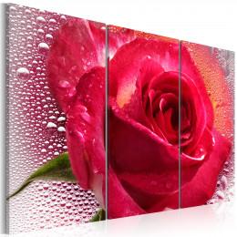 Tablou triptic Trandafiri roz