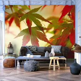 Fototapet - Colourful leaves