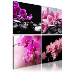 Tablou Orhidee mai frumoase ca niciodata
