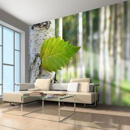 Fototapet - Birch leaf