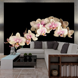 Fototapet - Blooming orchid