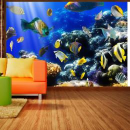 Fototapet - Underwater adventure