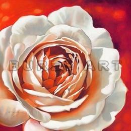 Tablou decorativ cu trandafir alb - inramat