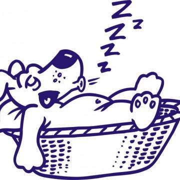 Catel somnoros