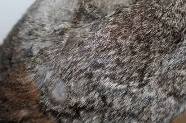 Caciula din blana de iepure maro anii '70