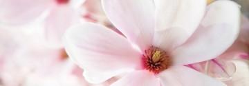 Magnolia Blossom and wood Rezerva parfum hidrosolubil pentru Odorizant HYDRO