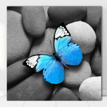 Tablou Canvas Fluture Albastru pe Pietre Spa BDS31