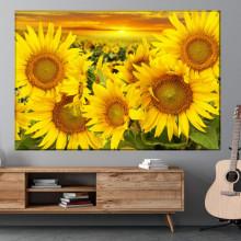 Tablou Canvas Floarea Soarelui SFW19