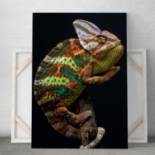 Tablou Canvas Iguana ICP1