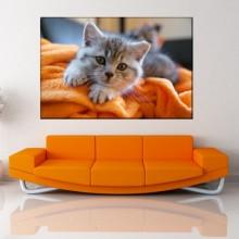 Tablou Canvas Pisicuta Gri pe Patura Portocalie CAT9