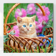 Tablou Canvas Pisicuta in Cosulet CAT11