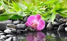 Tablou canvas zen art orhidee spa 03
