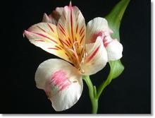 Tablou diverse flori 23