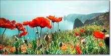 Tablou Flori de mac pe coasta la mare st1388