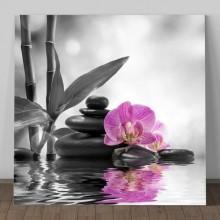 Tablou Orhidee Regala BMB2