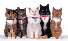 Tablou pisici 005
