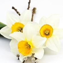 Tablou flori de primavara 02