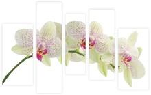 Multicanvas orhidee 5 panouri