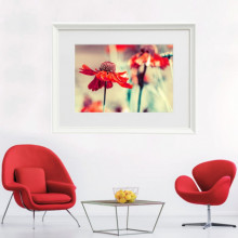 Poster + Rama Flori Salbatice cu Petale Rosii CFB44
