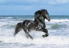 Tablou cal in marea albastra