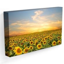 Tablou Camp cu Floarea Soarelui