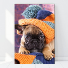 Tablou Canvas Bulldog cu Caciula Impletita DGS4
