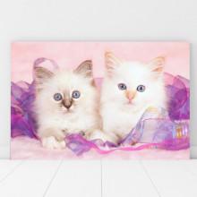 Tablou Canvas Pisicute Albe cu Ochi Albastri CAT34