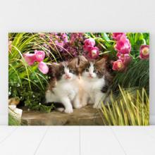 Tablou Canvas Pisoiasi in Gradina CAT2