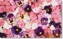 Tablou diverse flori 19