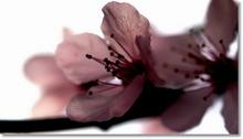 Tablou flori 002