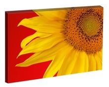 Tablou Focul Pasiunii Florii Soarelui