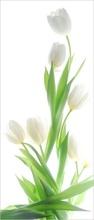 Tablou lalele albe 14