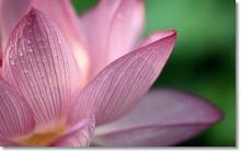 Tablou lotus 02