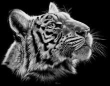 Tablou tigru 005