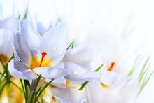 Tablou flori de primavara 01