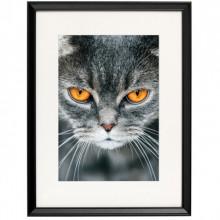Poster + Rama Motan British Shorthair CAT58