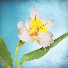 Tablou canvas modern floral 02