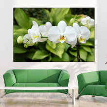 Tablou Canvas Orhidee Alba ORST126