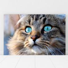 Tablou Canvas Pisica cu Ochi Albastri CAT16