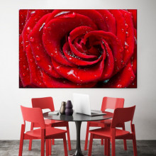 Tablou Canvas Trandafir Rosu cu Stropi ROS16