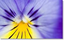 Tablou diverse flori 12