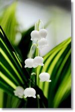 Tablou diverse flori 15